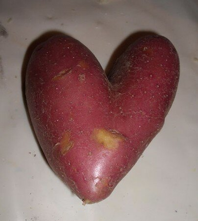 patate_coeur