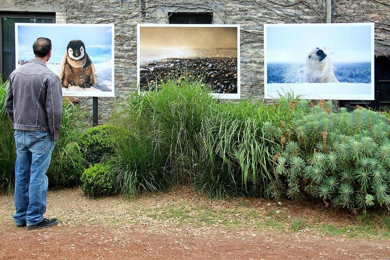 8-Bretagne-La Gacilly - Expo Photo (Paul Nicklen)_4754