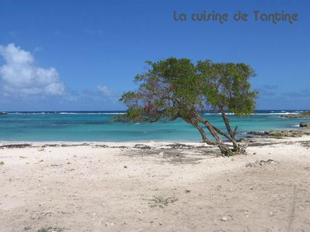 plage_GUADELOUPE