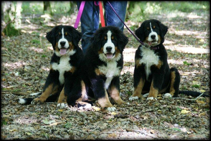 les 3 soeurs 3