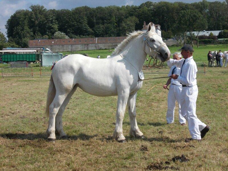 Dorette de Colincthun - 25 Juillet 2015 - National Boulonnais - Samer - 5e (2 ans GT)