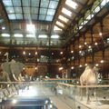 *PARIS* Museum d'Histoire Naturelle