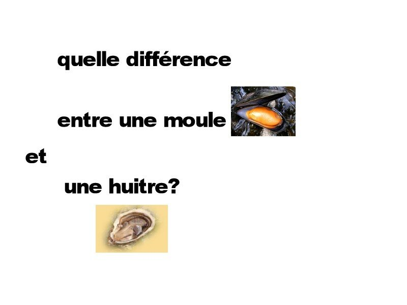 Diff rence entre 1 moule et 1 hu tre mon jardin secret for Difference entre pyrolyse et catalyse