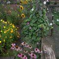 2009 08 25 Quelques fleurs annuelles et vivaces de mon jardin