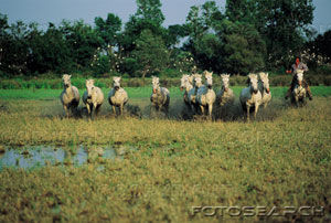 france_provence_camargue__F0010757
