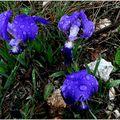 Cap Morgiou jeudi 8 avril 2010