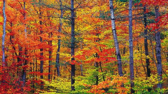 automne_585