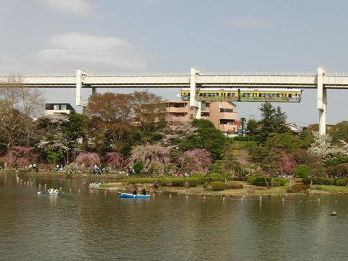 Chiba_Park_hanami_1