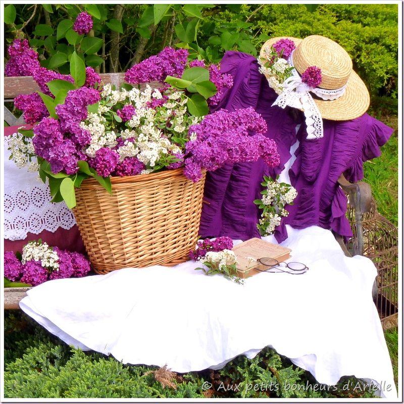 Une brassée de lilas