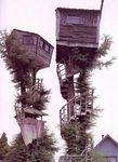 cabane-arbre