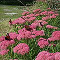 fleurs photo initiale