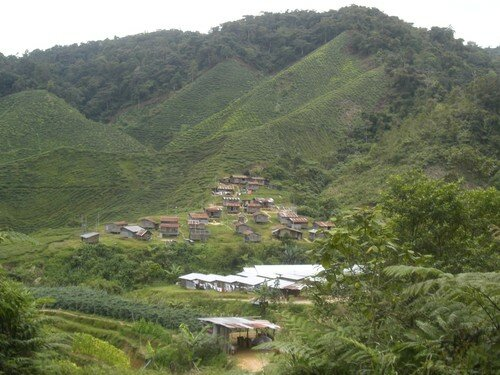 Cameron Highlands, village Oran Asli