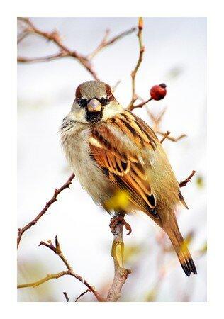 Oiseau_1