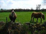 cheval_pres_de_Bains_2