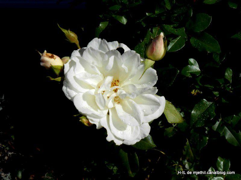 26-Fleurs 05-10-2012 035