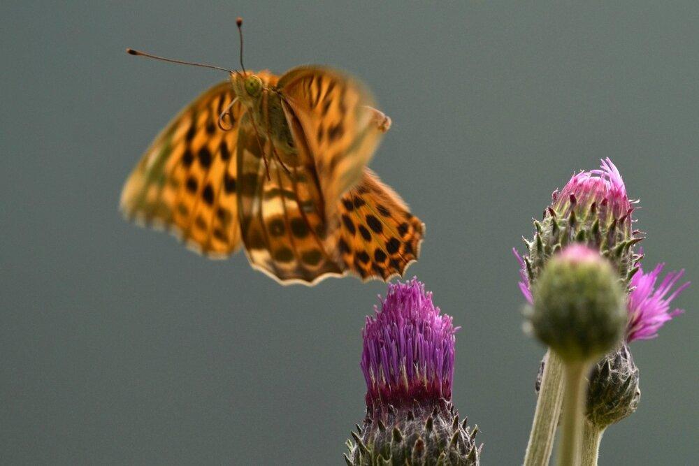 Le chamois, le papillon et Erri De Lucas