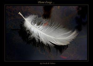 Plume_dange_a19136299