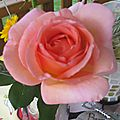 18062012 rose chantal 005