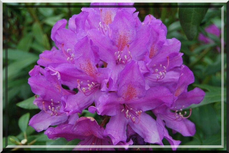 fleurs jardin, maison 062b