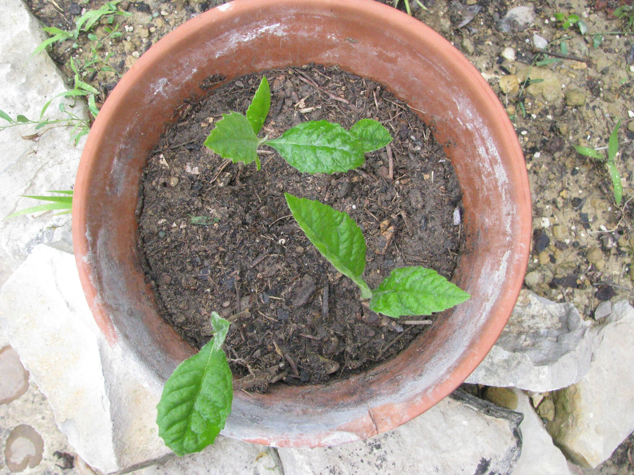 Des n fliers pour mon jardin coriandre s 39 occupe for Quand planter un amaryllis
