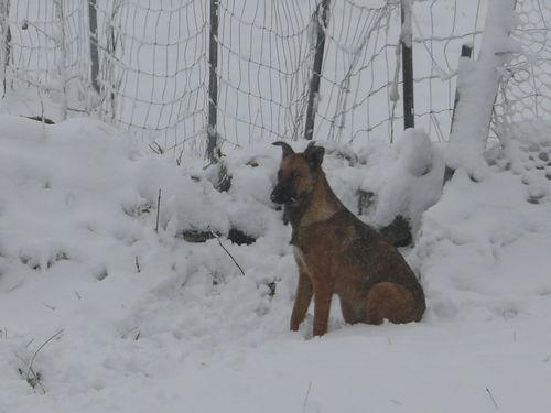 2008 10 29 Kapy assie dans le neige
