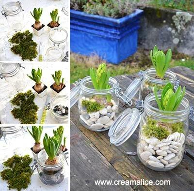Jardin d 39 hiver diy bocaux jacinthes recyclage et cie for Idees deco jardin d hiver