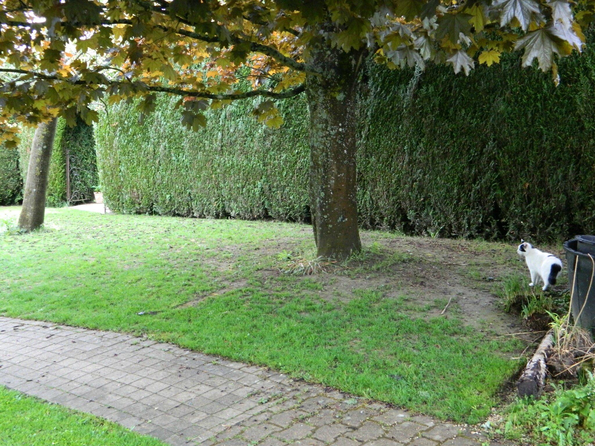Sous l 39 ombre d 39 un arbre le jardin par passion for Jardin que planter