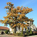 Eglise de Gorhey 3 VOSGES