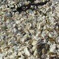 Cimetière d'huîtres sur la plage - Pointe de Penvins