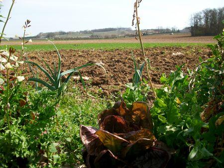 jardin_20mars2011_007