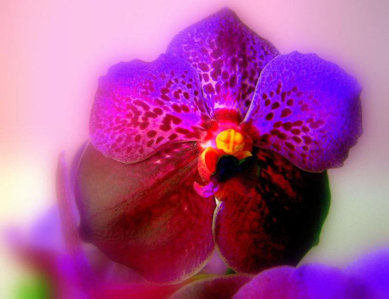 Orchid_e_05