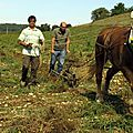 Sept 2014 - travaux de viticulture - domaine de mayoussier - phillipe escale