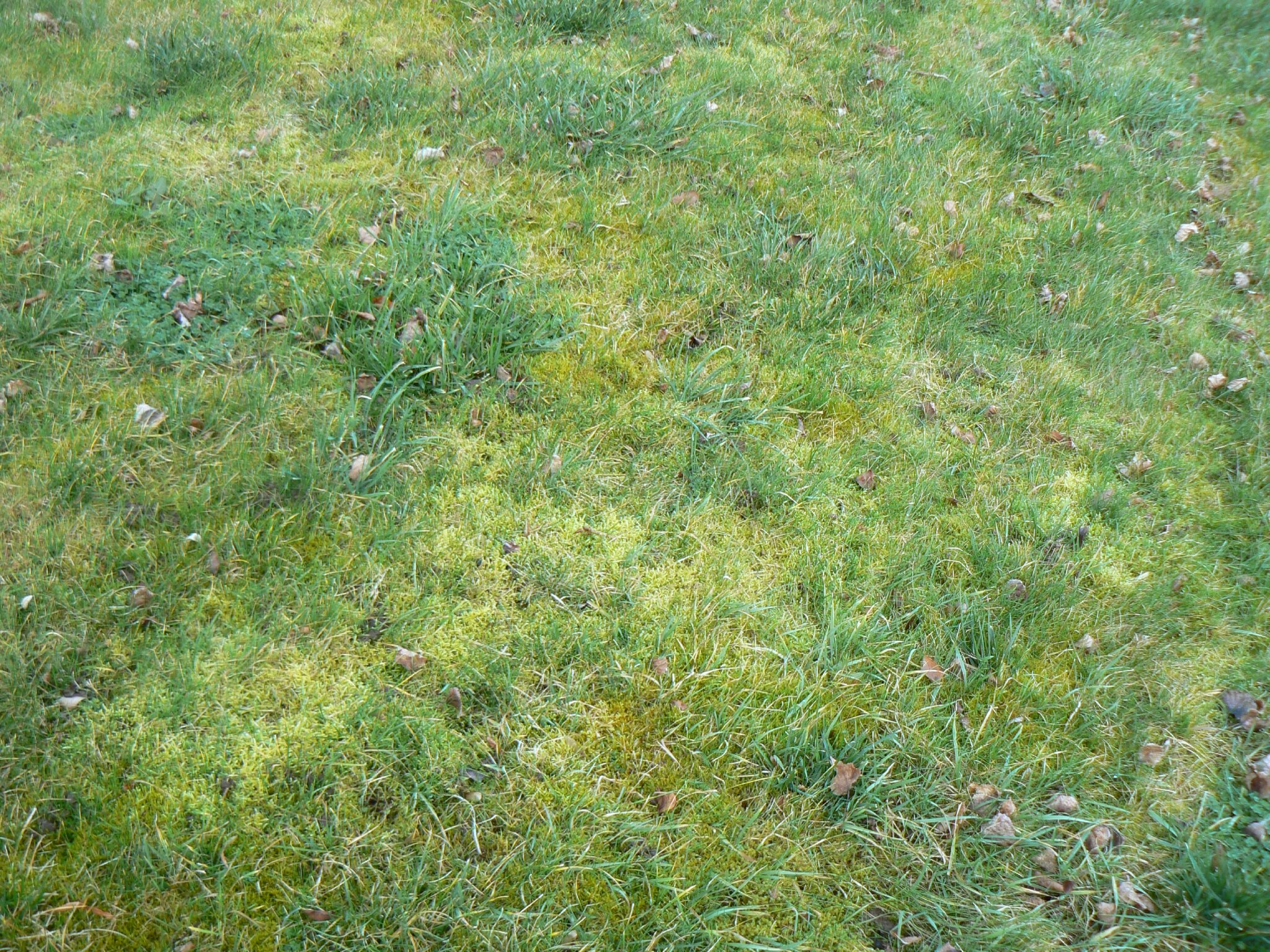 Ca y est a pousse jardin de lys for Supprimer la mousse de la pelouse