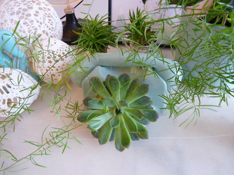 succulente5