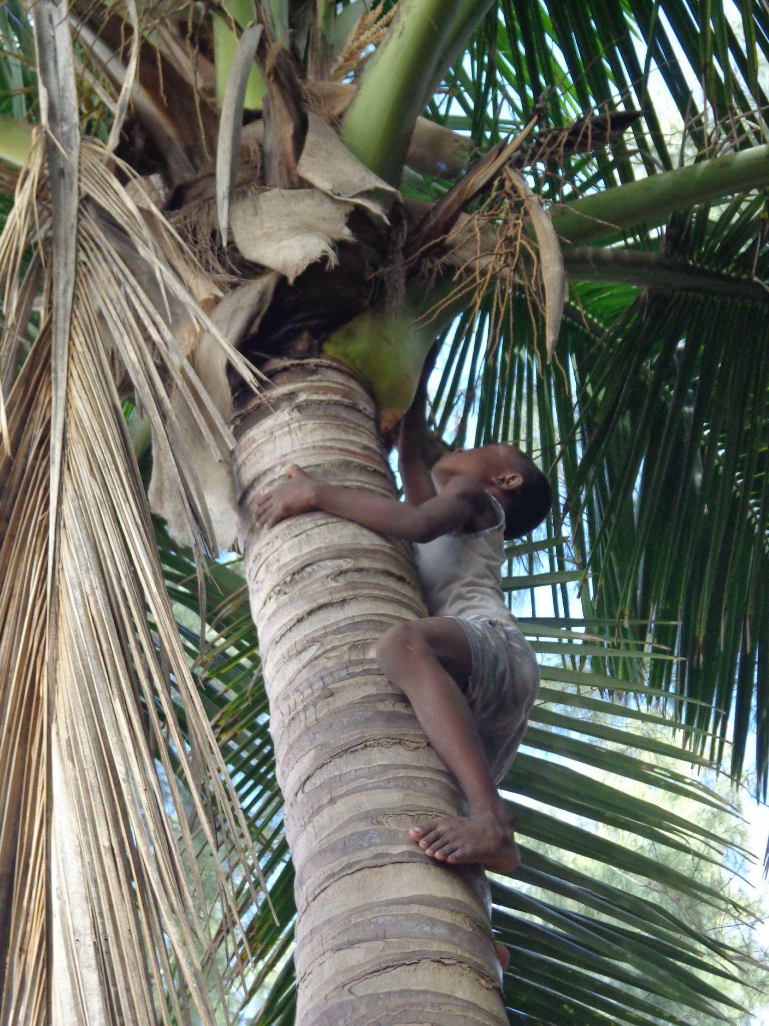 les enfants vont chercher les cocos