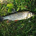 Session pêche à la mouche dans le loiret le samedi 05 septembre 2015 !!!!