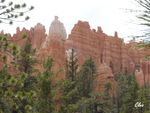21_Jun_04___Bryce_Canyon__Navajo_Loop_trail_8