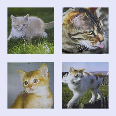 Calendrier Kat (4)