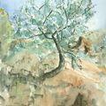 Jeune olivier