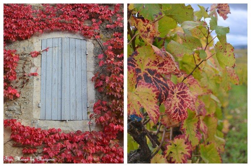 Couleurs d'automne Vignes9