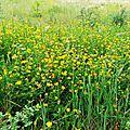 Fleurs de Leon 24061624