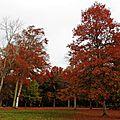 Vielle automne 2410156