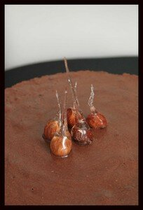 entremet_choco_4