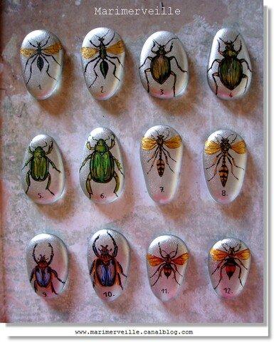 Galets d'entomologie Marimerveille