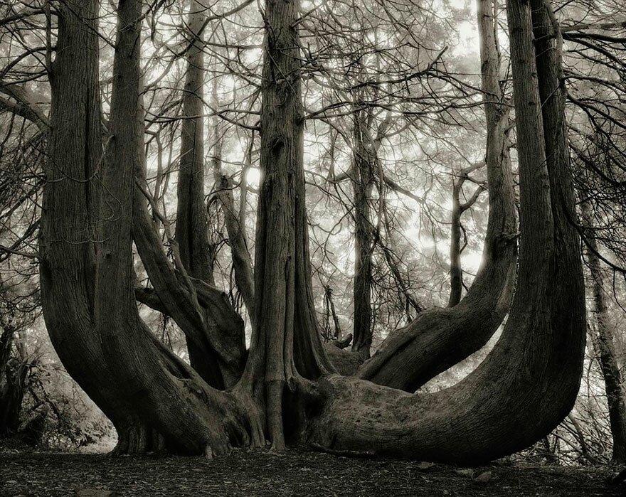 Beth Moon a photographié des arbres vraiment incroyables...