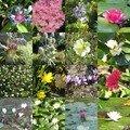Un après-midi dans les fleurs...