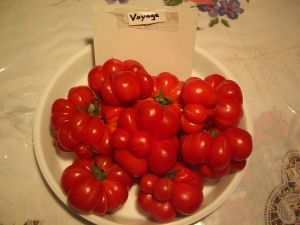 Tomate-voyage-