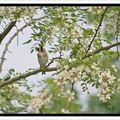 Petit oiseau du lundi matin