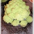 table romanesco 009_modifié-1