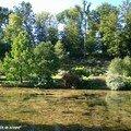 Végétation de bord d'étang…